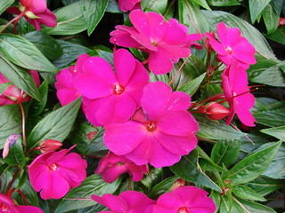 Net kavka kvety na terase - Plantas exteriores todo el ano ...